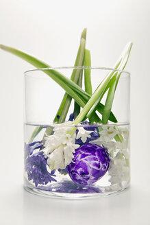 Hyacinths in flower vase, (Hyacinthus) - MNF00137