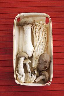 Mixed mushrooms in bowl, elevated view - 08183CS-U