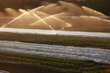 Germany, Irrigation plant on field - RDF00272