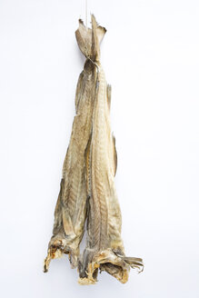 Stockfish - GWF00555