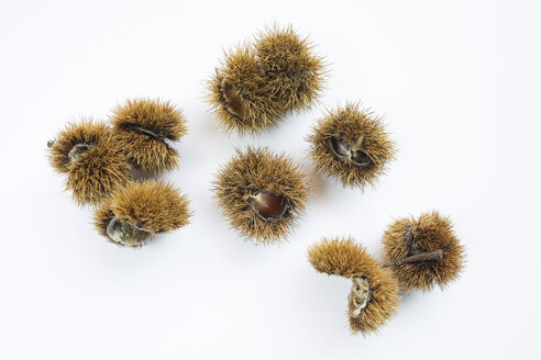 Chestnuts, elevated view - GWF00638