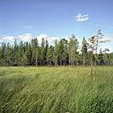 Finland, Hossa National park - PM00558