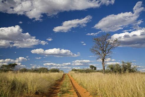 Africa, Botswana,Track through Kalahari Desert - FOF00759