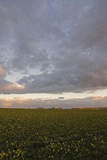 Germany, Bavaria, Landscape - LFF00150