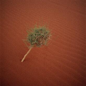 Jordan, Wadi Rum, Tree in the desert, elevated view - GA00078