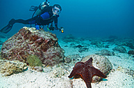 Galapagos Islands, Ecuador, Scuba diver and starfish - GNF01012