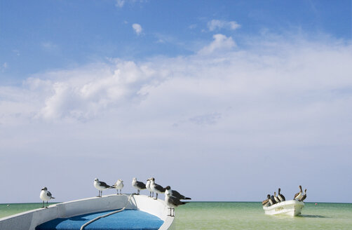 Mexico, Holbox Island, Mexico, Holbox Island, Seagulls and Pelicans sitting on fisherboat - GNF00999