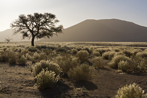 Africa, Namibia, Desert landscape with tree - FOF01022