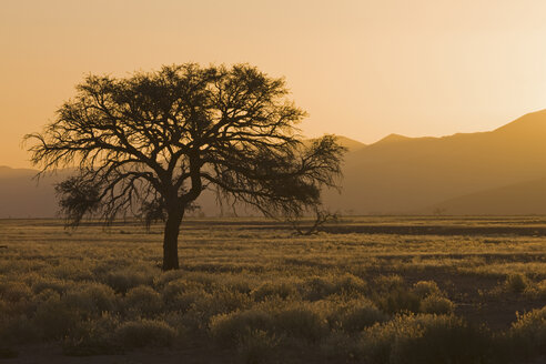 Africa, Namibia, Tsauchab River, Landscape at sunset - FO01045