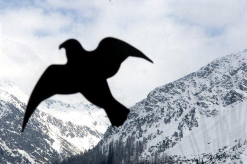 Switzerland, Graubünden, Arosa, Bird dummy, close-up - AWDF00013