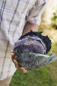 Person holding red cabbage, upper section, close-up - BMF00427