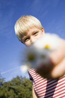 Little boy (4-5) holding daisies - SMO00265