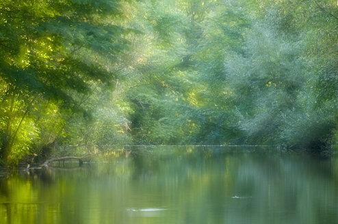 Germany, Baden Württemberg, River in forest - SMF00397