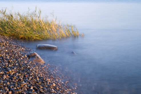 Germany, Lake Constance, shore with pebbles - SMF00373