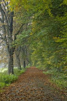 Germany, Baden Württemberg, Path through autumn woods - SMF00360