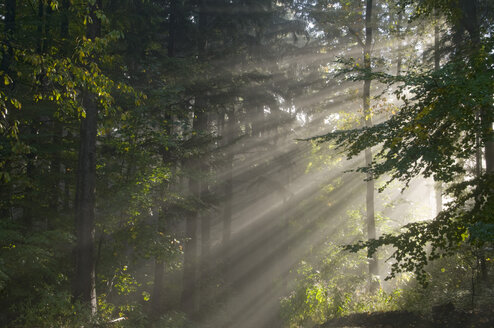 Germany, Baden-Württemberg, Light Rays in Forest - SMF00345