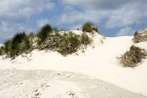 Germany, Amrum, Sand dune with marram grass - AWDF00089