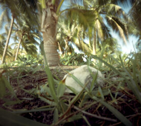 Mexico, Palm trees, stone in the foreground - AWD00308