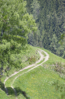 Italy, South Tyrol, Farm track and woodland - GNF01059