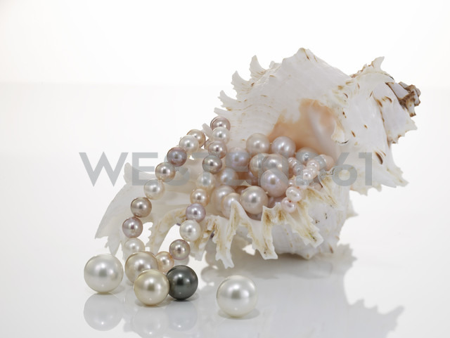 Pearl necklet and pearls with nautilus - AKF00015 - Andreas Koschate/Westend61