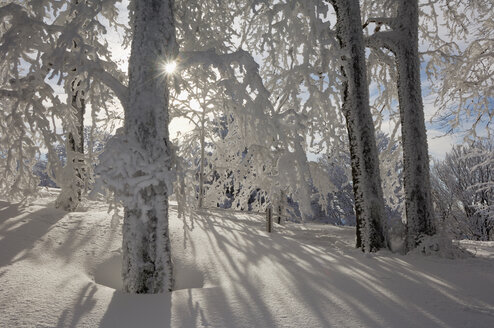 Germany, Saxony-Anhalt, Snow-covered trees and sun rays - RUEF00085