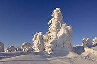 Germany, Saxony-Anhalt, Snowcapped trees - RUEF00082