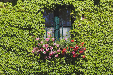 Austria, Facade with window, ivy and flower - WWF00609