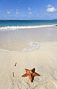 Grenada, Carriacou, Paradise Beach at L'Esterre, Starfish on beach - PSF00014