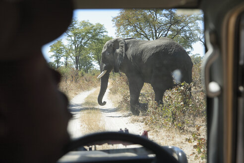 Africa, Botswana, Okavango Delta, Elephant (Loxodonta Africana) crossing road - PK00342