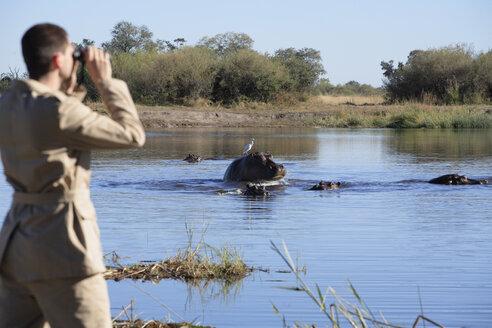 Africa, Botswana, Okavango Delta, Man viewing hippos through binoculars, rear view - PK00324