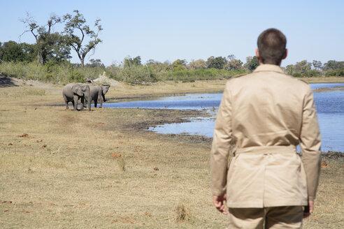 Africa, Botswana, Okavango Delta, Man watching African Elephants (Loxodonta africana) at a waterhole, rear view - PK00318