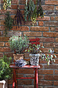 Austria, Salzburger Land, Dried herbs on brick wall, close up - HHF02882
