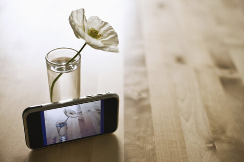 Picture of flower on camera phone screen placed in front of flower in glass - MFF00400