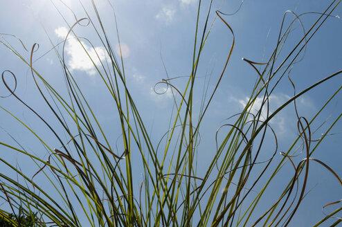 France, Alsace, Grass against blue sky - AWDF00349