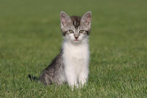 Germany, Bavaria, Kitten sitting in meadow - RUEF00174