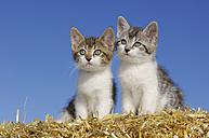 Germany, Bavaria, Two kittens in straw - RUEF00168
