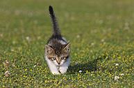 Germany, Bavaria, Kitten playing in meadow - RUEF00162