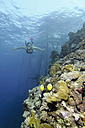 Egypt, Red Sea, Woman snorkeling next to coral reef - GNF01154