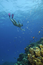 Egypt, Red Sea, Hamata, Woman snorkeling next to coral reef - GNF01151