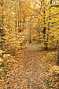 Germany, Rhineland-Palatinate, Wood, leaves, autumn colours - GWF00994
