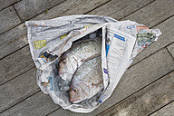 Red Snapper (Lutjanus campechanu) wrapped in paper - GWF01047