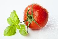 Tomato and basil leaves, close-up - MAEF01826