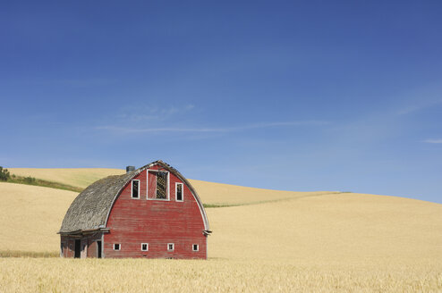 USA, Palouse, Whitman County, Washington State, Barn in field - RUEF00296