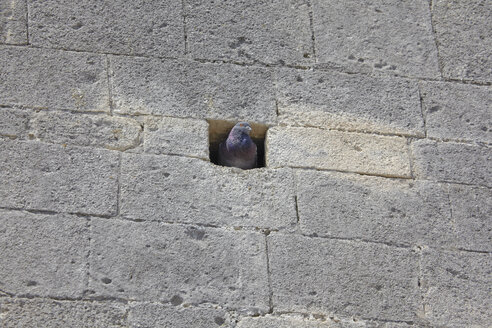 France, Pigeon in a hole in wall - TLF00364
