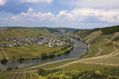 Germany, Rhineland-Palatinate, Moselle River near Trittenheim - 11906CS-U