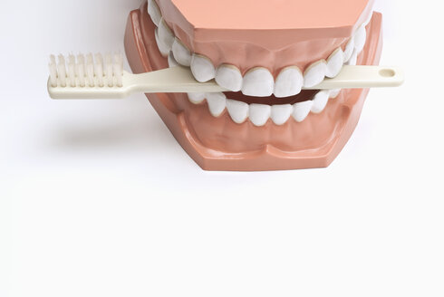 Set of dentures and toothbrush - KJF00068