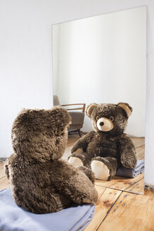 Teddy sitting in front of mirror - JRF00124