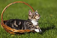 Germany, Bavaria, Kitten lying in basket - FOF01981