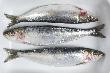 Fresh Sardines, elevated view - THF01082
