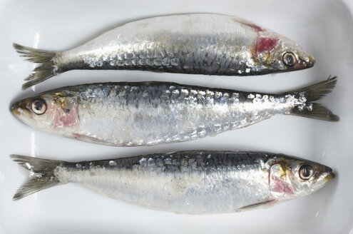 Fresh Sardines, elevated view - THF01082